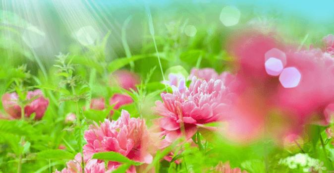 Информационные послания растений