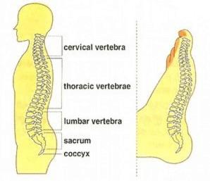 проекцию спины на стопах