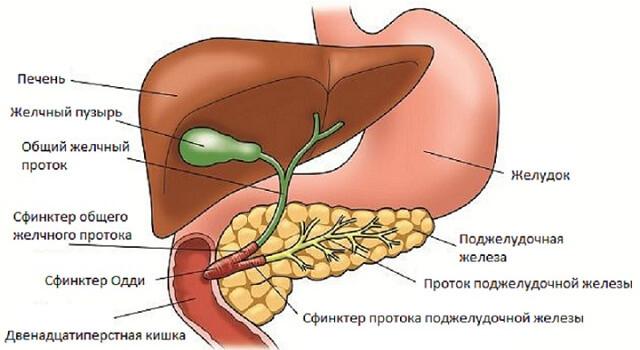 Рост грибковых заболеваний у женщин после удаления желчного пузыря