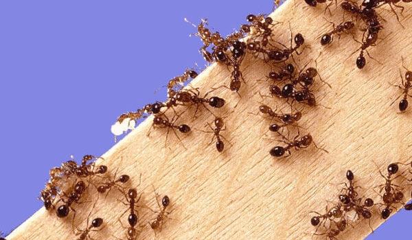 Лето: Советы по борьбе с муравьями