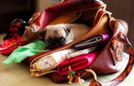 womenbag
